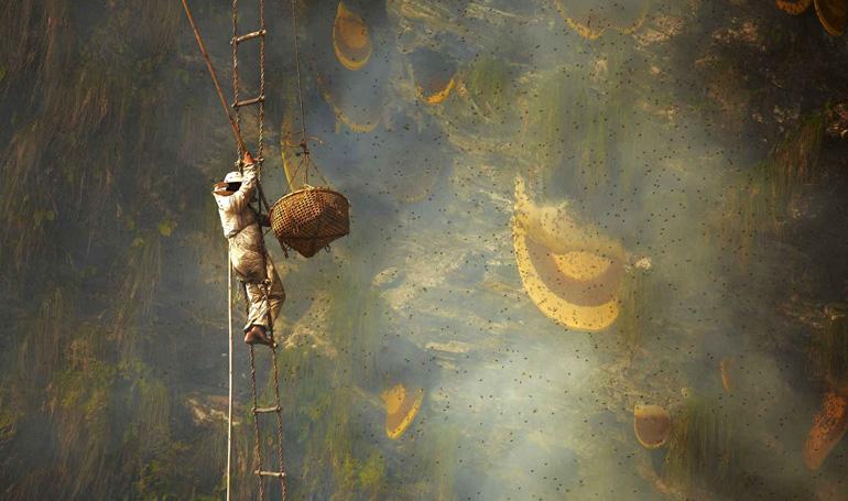Đàn ông Malaysia săn mật ong rừng trong đêm