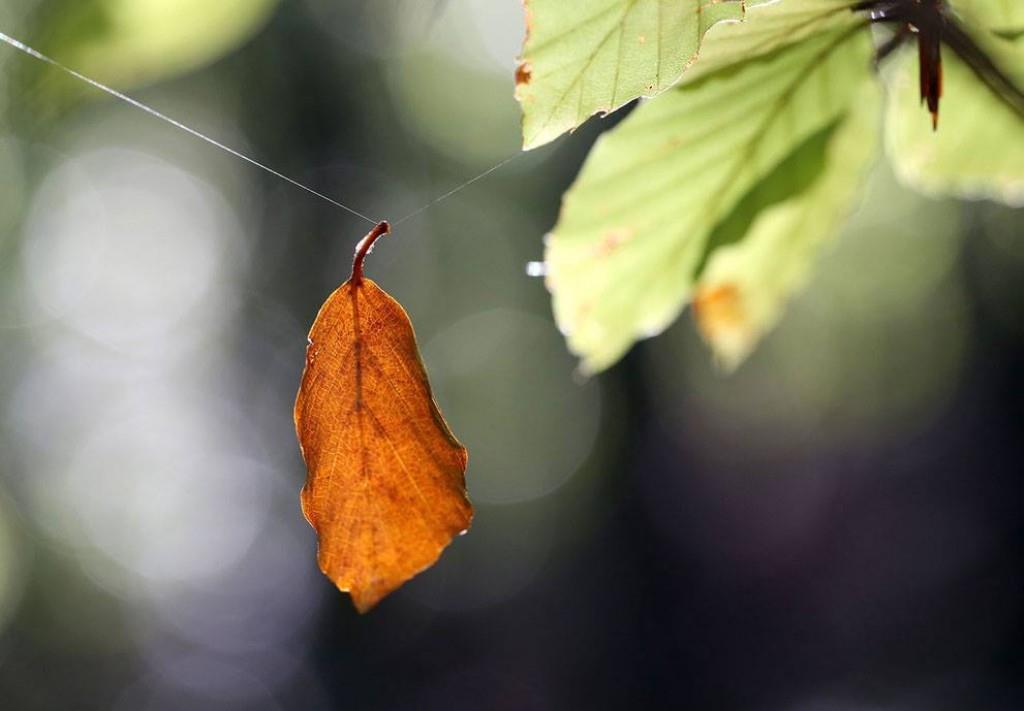 Nhân sinh điều gì không thể chờ không cần sợ không thể lựa chọn?