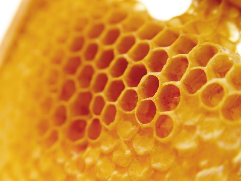 Keo ong làm kìm hãm sự tăng nhanh của tế bào ung thư