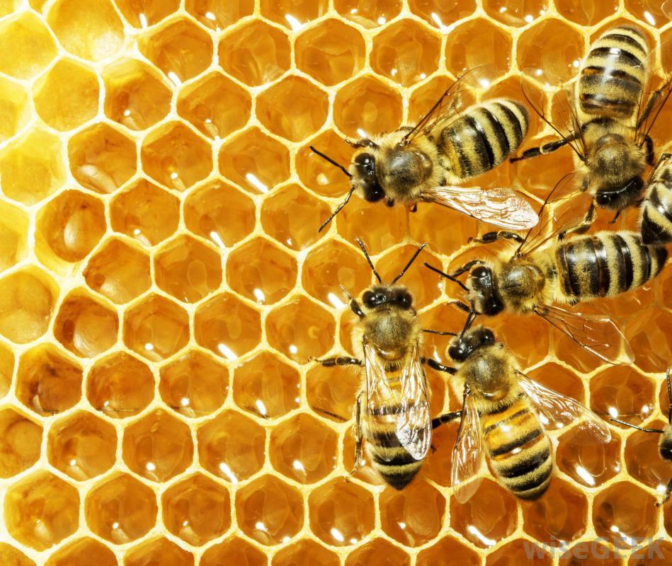 Những Điều Thú Vị Về Loài Ong Không Phải Ai Cũng Biết