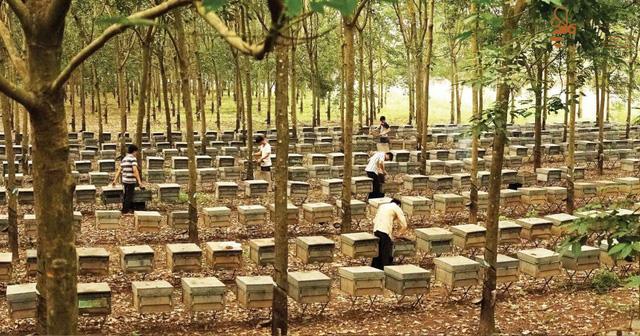 Thị trường hứa hẹn của mật ong Việt Nam là Châu Âu