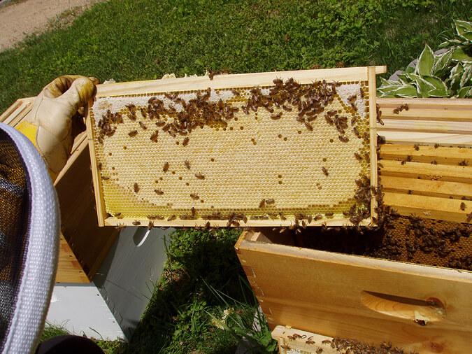 Thị trường mật ong