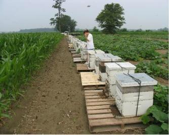 10 nước sản xuất mật ong lớn nhất thế giới