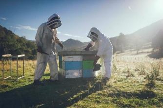 Mật ong Manuka và tranh chấp giữa Australia và New Zealand