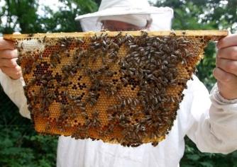 Những sai lầm khiến mật ong Việt Nam xuất ngoại kém