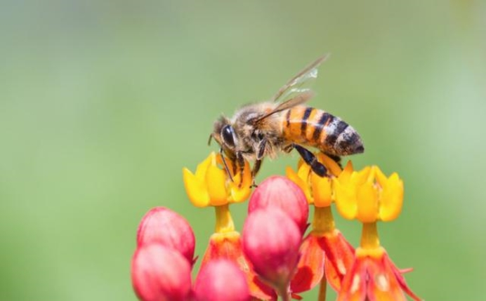 Sự thật về mật ong giả, mật ong thật, mật ong rừng, mật ong nuôi, mật ong đóng đường...