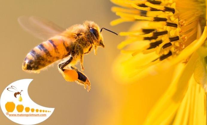 Mật ong được hình thành như thế nào
