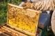 Doanh nghiệp xuất khẩu mật ong khẩn trương thủ tục về chống bán phá giá