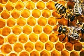 6 Loại ong mật ở Việt Nam