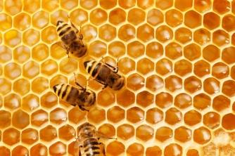 Nuôi ong mật có lời không?